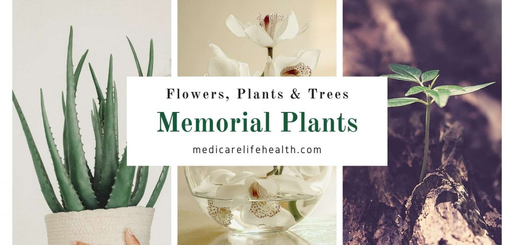 flowers plants and trees for memorials, funerals and burials