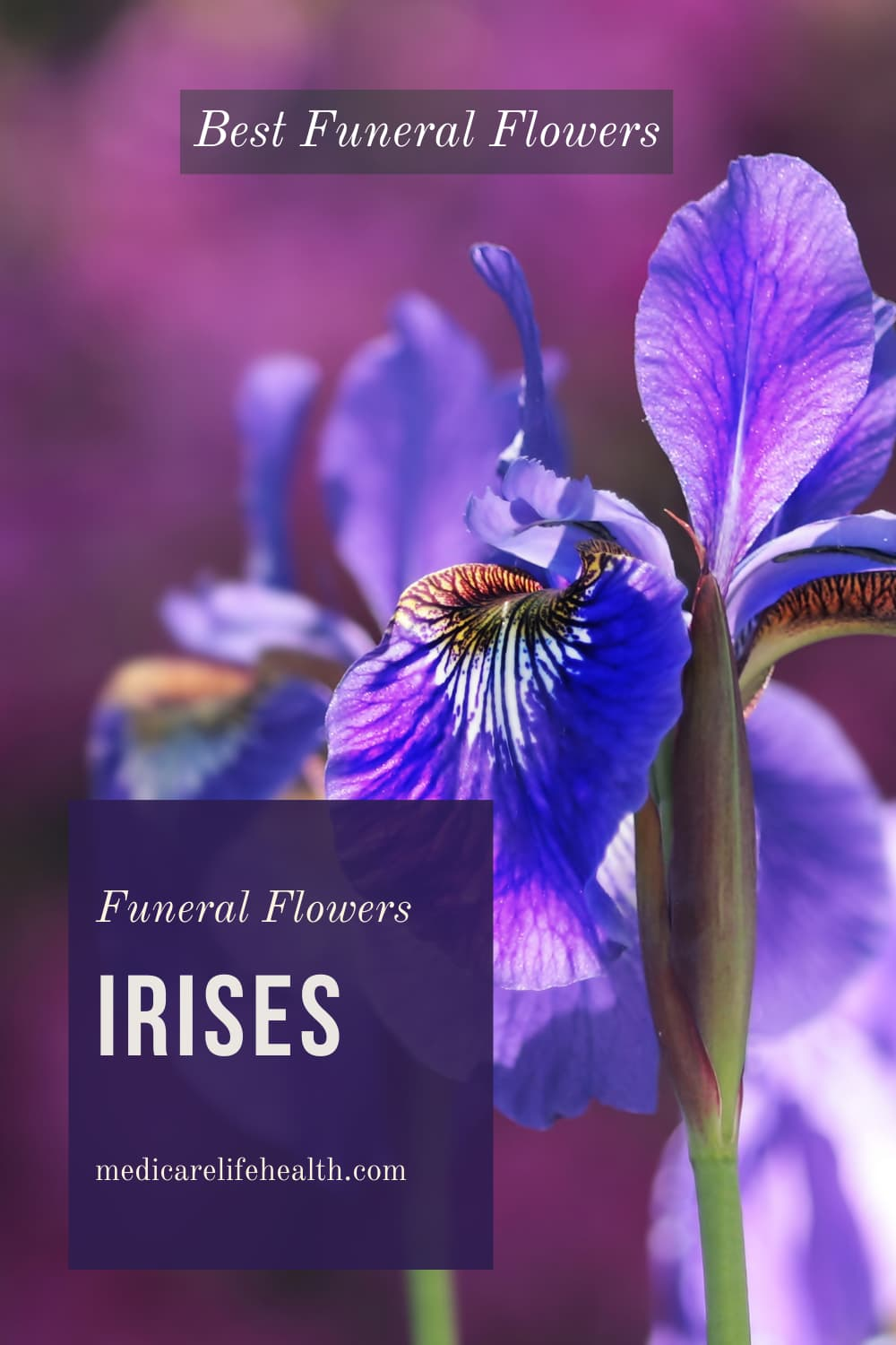irises funeral flowers best flowers for funerals