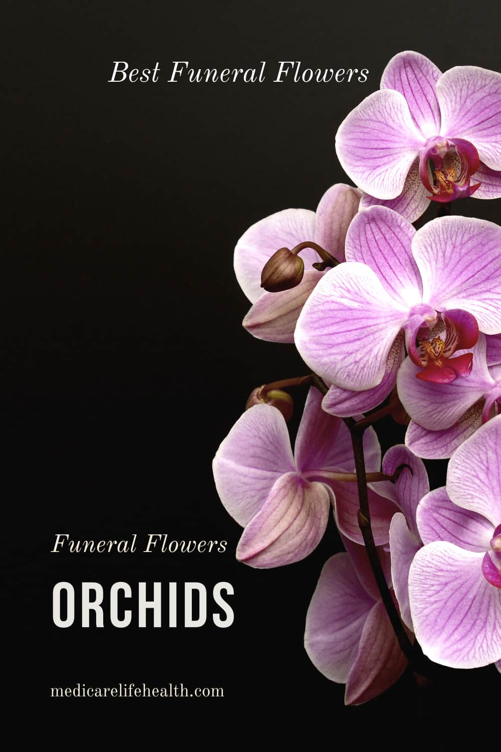 orchids best funeral flowers