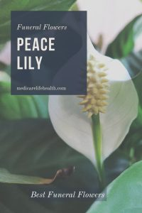 peace lily funeral flower options and arrangements